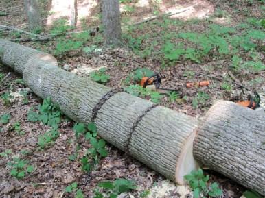 Logging 006