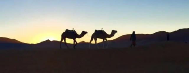 Camel Trekking was always majestic to me.