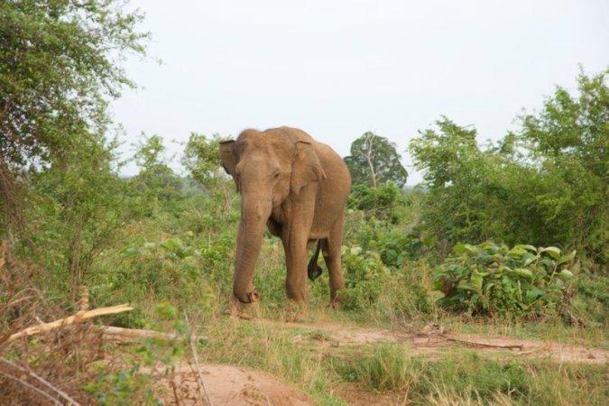 elefanti udawalawe