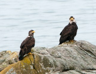 March Bald Eagles2