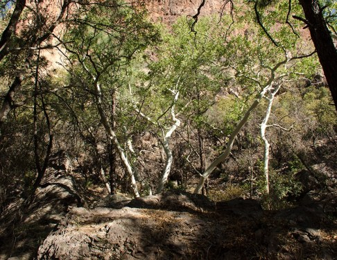 Cave Creek Canyon Scenic View6