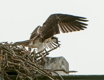 Chick steps out of the nest