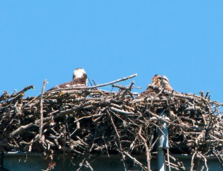 Hanging out in the nest