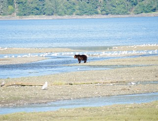 090318 Alaska Cruise 0069 copy