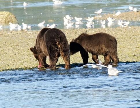 090318 Alaska Cruise 0527 copy