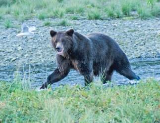 090318 Alaska Cruise 0660 copy
