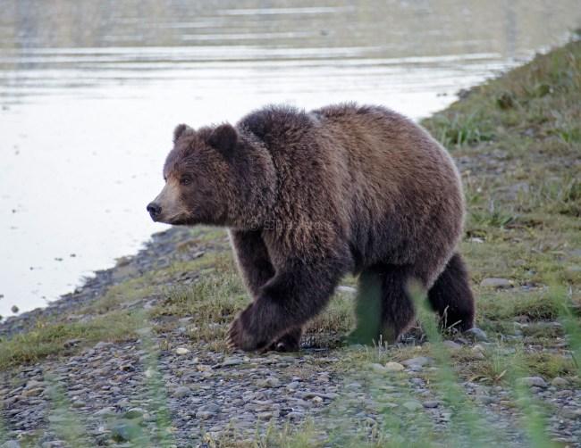 090318 Alaska Cruise 0939 copy