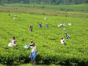 People working inside a field
