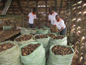 3 men tending to large bags of harvest