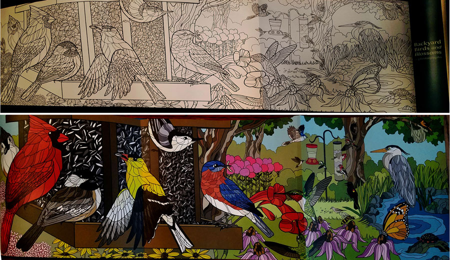 Birds and Blossoms coloring book showing colored and uncolored poster