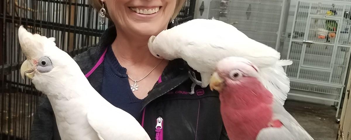 Even cockatoo species have different personalities