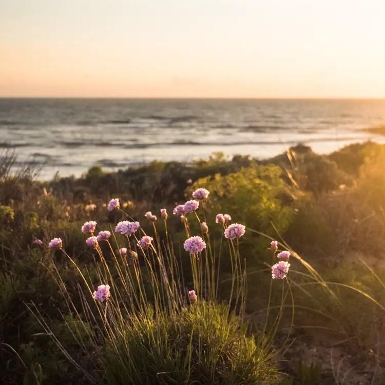 vila nova de milfontes - dunes flowers
