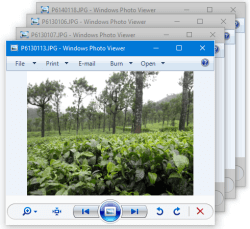 windows photo viewer multiple windows