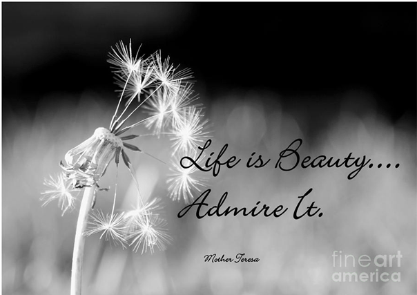 Life is beauty admire it