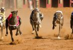 premier greyhound tips