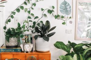 Plants on night stand and floor