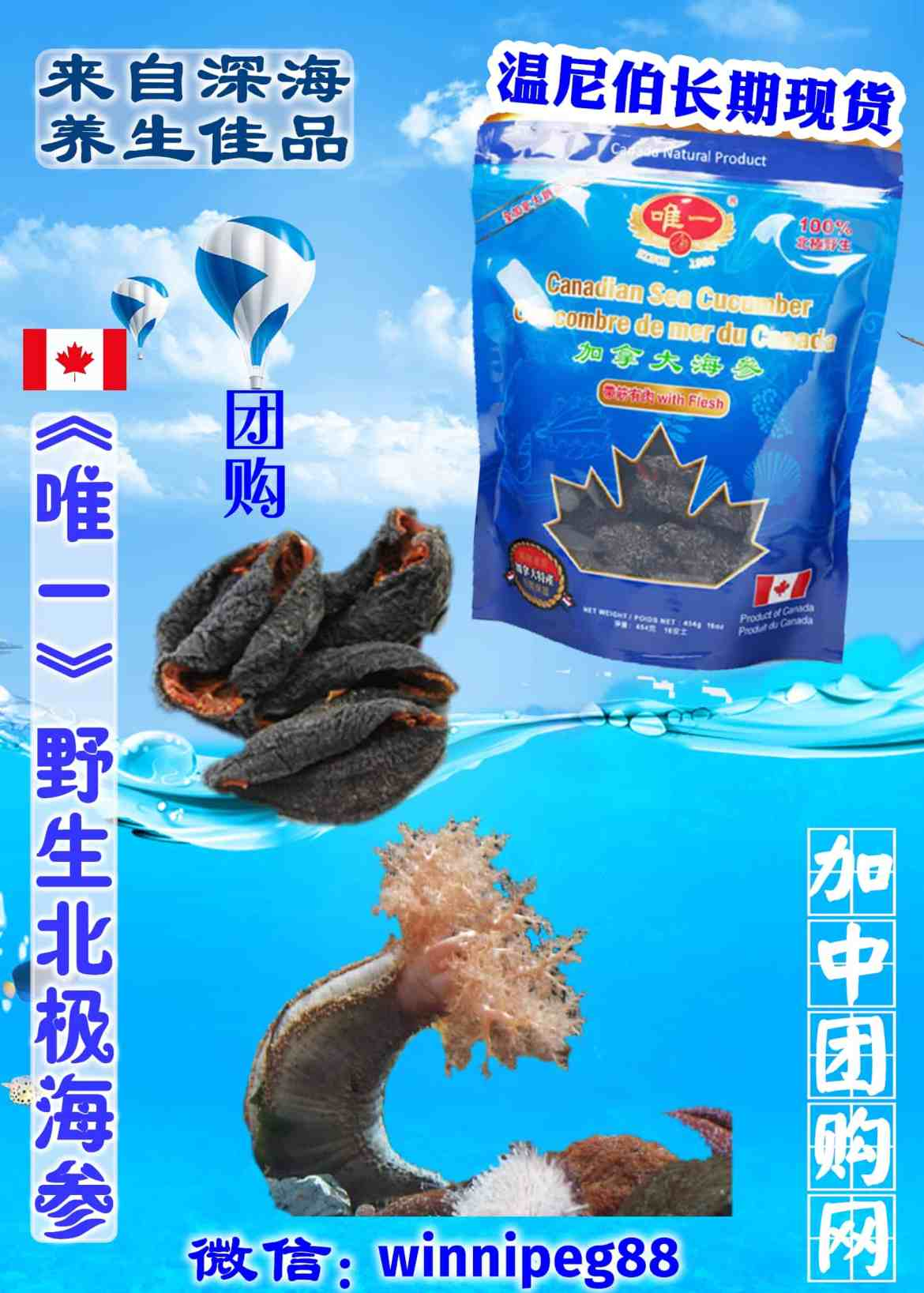 加拿大北极海参