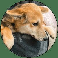 Emergency-puppy-circle