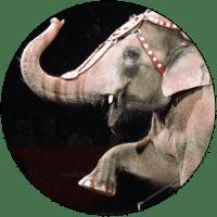 animals-entertainment