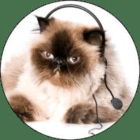 cat-on-phone