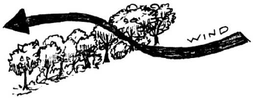 Winrock International » Nitrogen Fixing Trees as Atoll