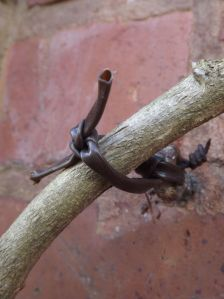 Pruning Wisteria - checking ties
