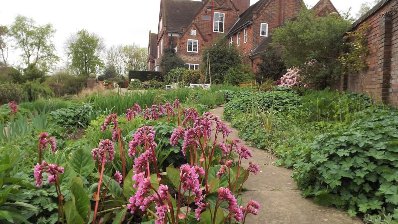 Bergenia 'Bressingham Bountiful', Winterbourne House and Garden, Digging for Dirt