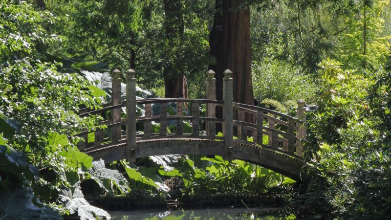 The Japanese Bridge, photograph by Alice Whitehouse, Digging for Dirt, Winterbourne House and Garden