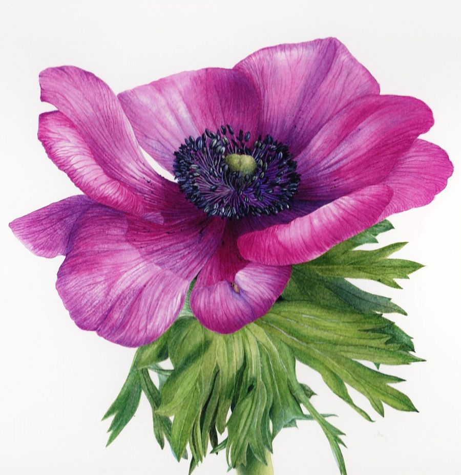 Anemone by Jeni Neale, Snapshot, Winterbourne House and Garden, Digging for Dirt