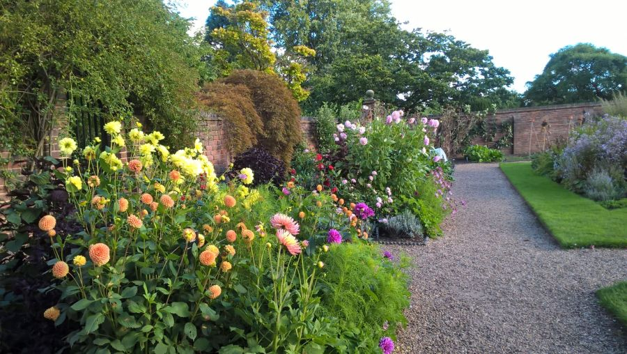 Dahlias in the Walled Garden, photograph by Laura Townsend, Now and Then, Winterbourne House and Garden, Digging for Dirt