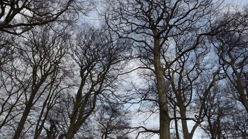 Edgbaston Wood, Now and Then: December, Winterbourne House and Garden, Digging for Dirt