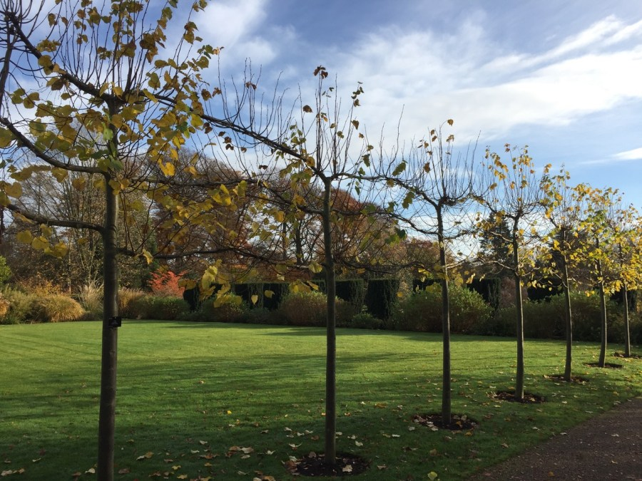 The Lime Walk in autumn, photograph by Paul Martin, career change, Winterbourne House and Garden, Digging for Dirt