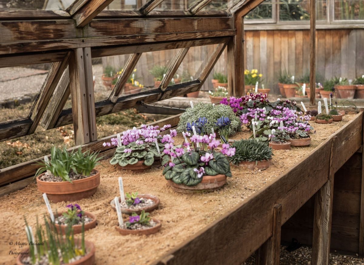 The Alpine House, photograph by Maggie Bucknall, Winterbourne House and Garden, Digging for Dirt