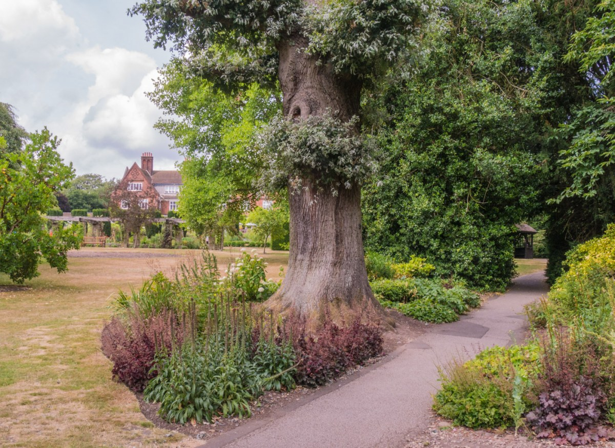 The Oak Border, photograph by Peter Toolan, Snapshot Peter Toolan,, Winterbourne House and Garden, Digging for Dirt