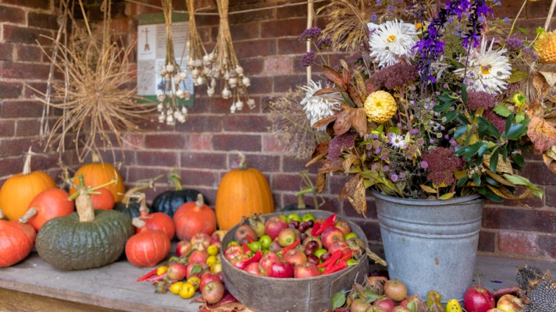 Autumn harvest in the Old Kitchen Courtyard, photograph by Maggie Bucknall, The Week That Was, Winterbourne House and Garden, Digging for Dirt