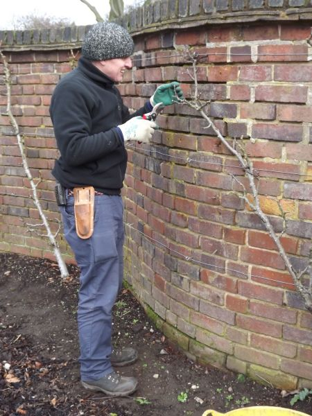 Huw pruning cordon apples in the Walled Garden, The Week That Was, Winterbourne House and Garden, Digging for Dirt