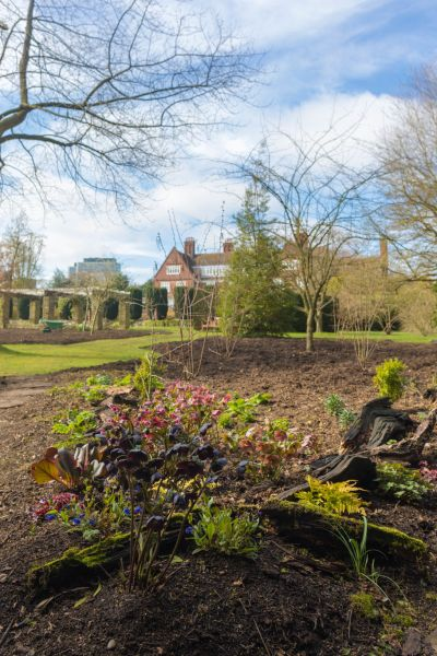 Some plants have already been planted in the shadier areas of the new borders where leaf mould not compost has been added to the soil, photograph by Maggie Bucknall, The Week That Was, Digging for Dirt, Winterbourne House and Garden