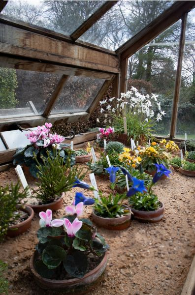 The Alpine House, photograph by Maggie Bucknall, The Week That Was, Digging for Dirt, Winterbourne House and Garden