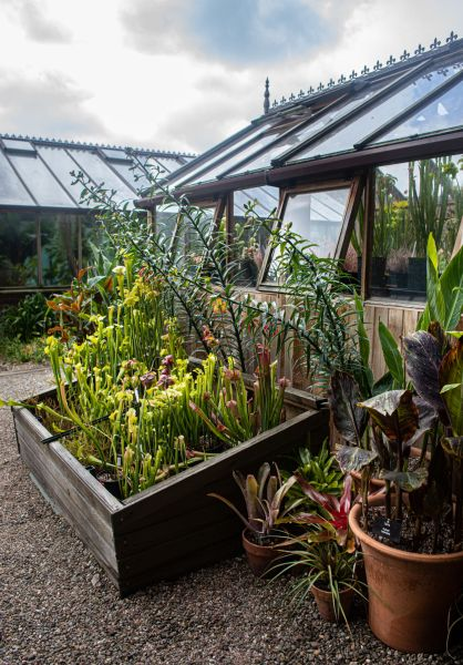 The new carnivorous plant display, photograph by Maggie Bucknall, The Week That Was, Digging for Dirt, Winterbourne House and Garden