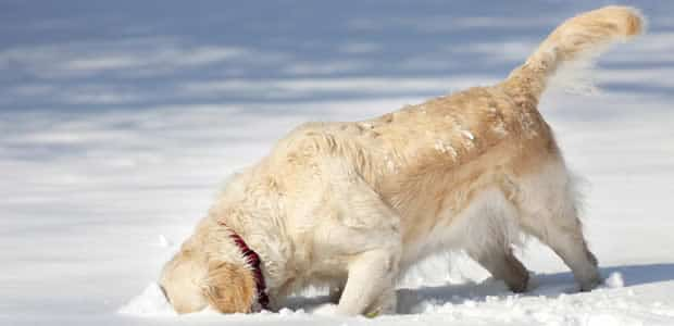 Wintersport met de hond
