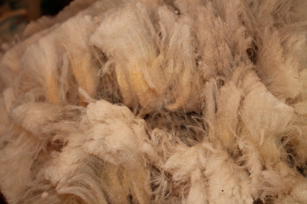 moorit cvm wool