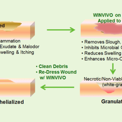 Wound Assessment Diagram Cat Five Wiring Skin Care Great Installation Of Winvivo How Works For Pressure Ulcers Full Body