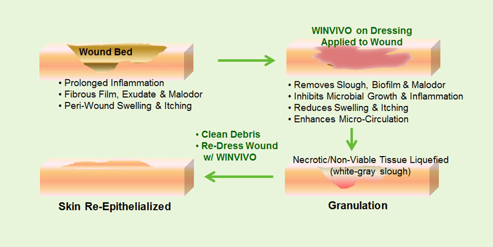 wound assessment diagram honeywell smart thermostat wiring skin care great installation of winvivo how works for pressure ulcers full body