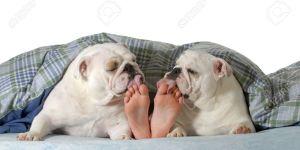 """""""Dormi con il tuo animale domestico?: pro e contro di una pratica sempre più diffusa"""""""
