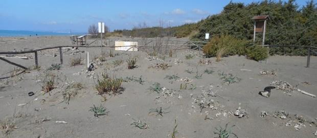 Le dune costiere: un ecosistema dinamico