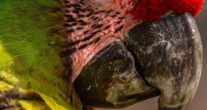 Il pappagallo dispettoso