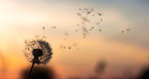 Basta con le allergie primaverili