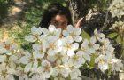 Primavera quanto mi manchi!