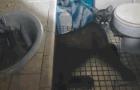 Un puma che occupa il bagno di casa