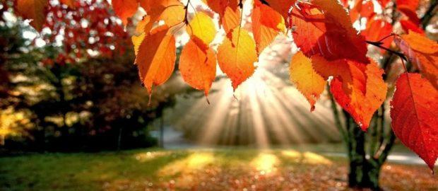 L'autunno è una seconda primavera, quando ogni foglia è un fiore!